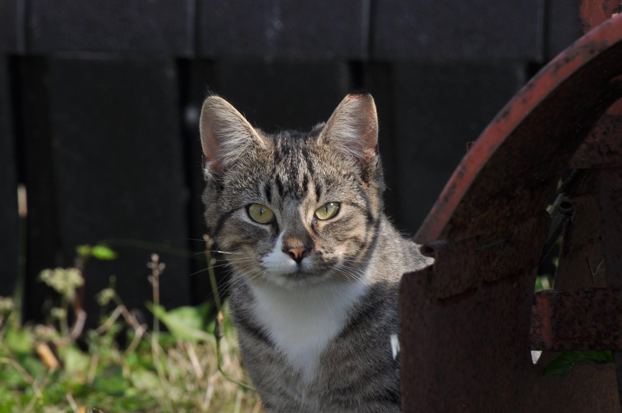 How many neutered cats live 64